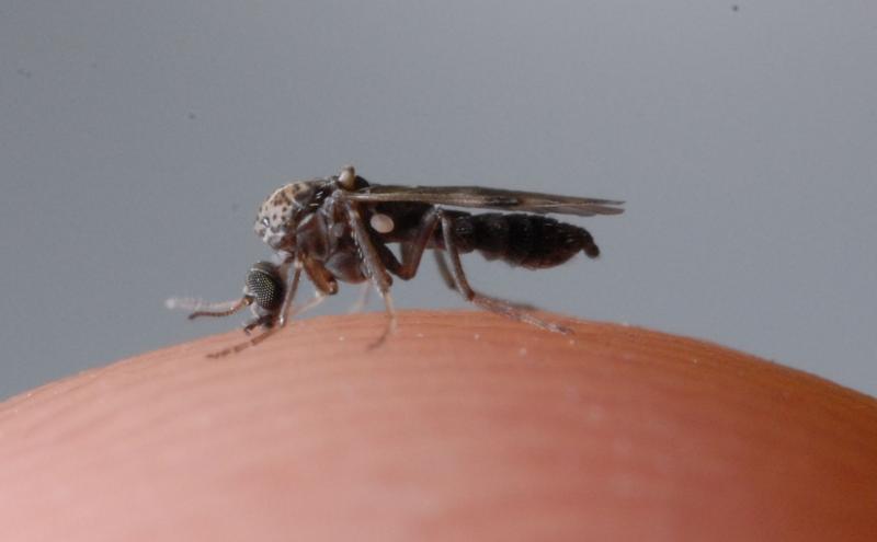 Con dĩn là loại côn trùng gây ra rất nhiều phiền toái