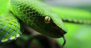 Các loại rắn thường gặp ở Việt Nam